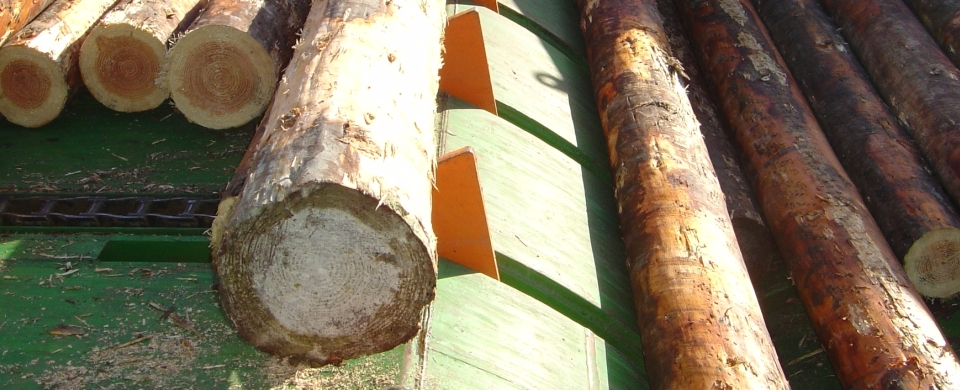 Stem and Log Handling